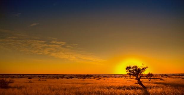 Att så ett frö i Kalahari